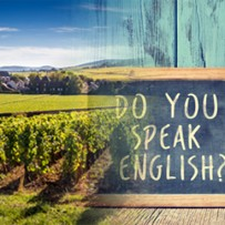 Formation en anglais et découverte du vignoble